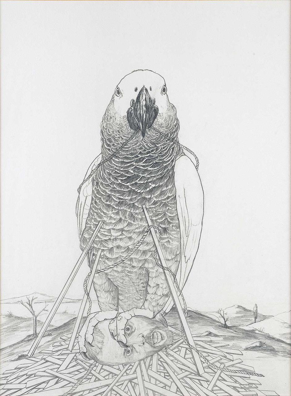 Παπαγάλος, 2009, μολύβι σε χαρτί, 30x40 εκ.